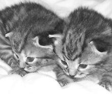 Twins by samcatt