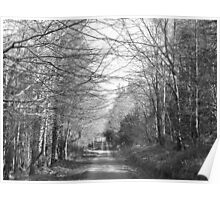 kilderry wood Poster
