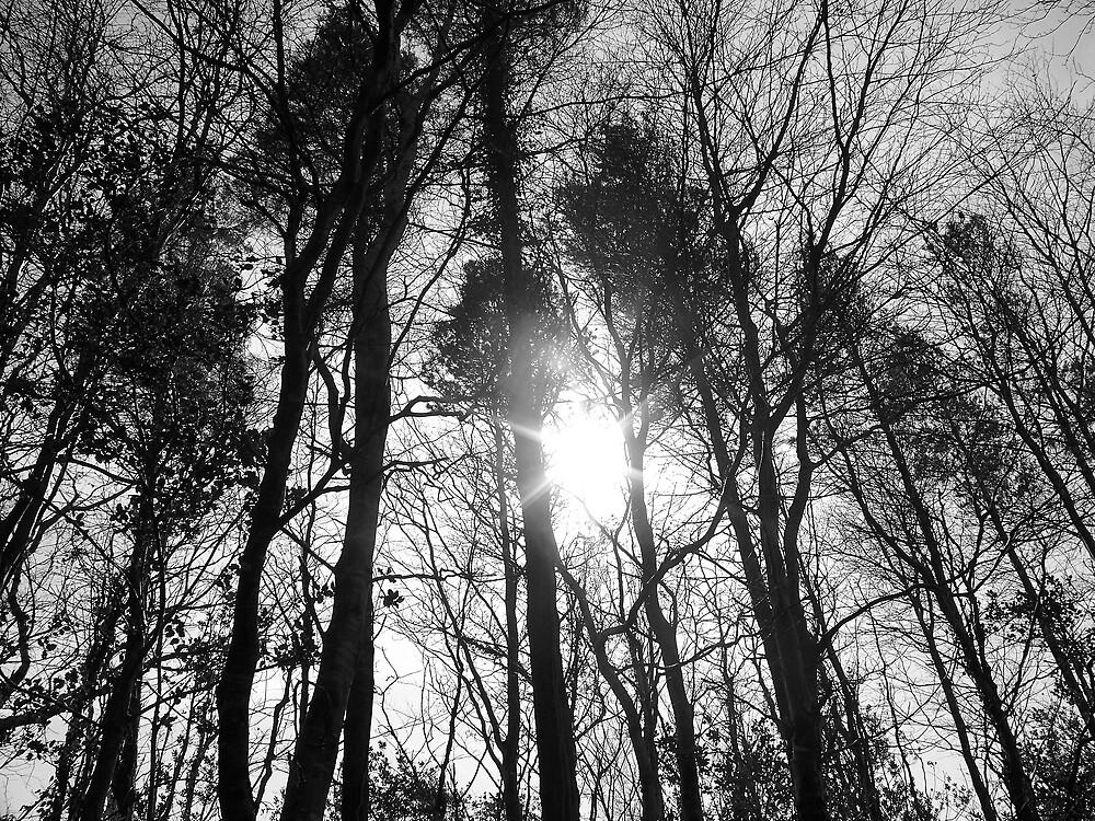 sunlight by James Cronin