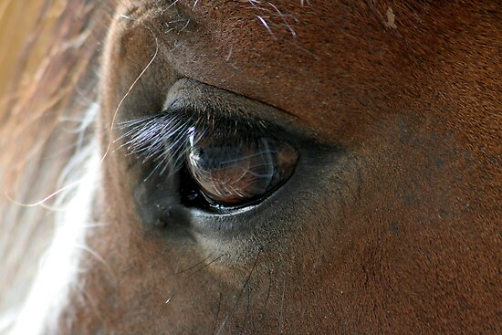 Shire Foals eye, by AnnDixon