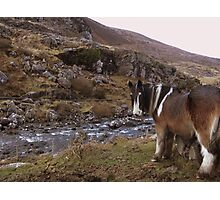 Horse Taking Refreshments Gap of Dunloe Co. Kerry!! Photographic Print
