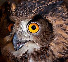 Got An Eye On You! by Bobby McLeod