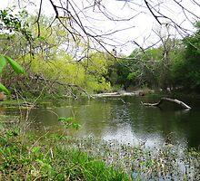 Creek by Diana Moya