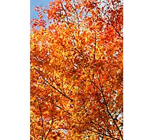 Autumn foliage Photographic Print