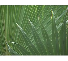 Overlapping Palms Photographic Print