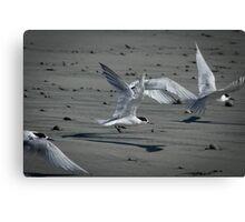 Flying Fairies  Canvas Print
