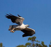 Fly Over by byronbackyard