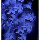 BLUE HYACINTHS  by scarletjames