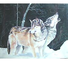Alpha wolves rest before the hunt Photographic Print