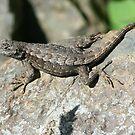 Fence Lizard by SKNickel