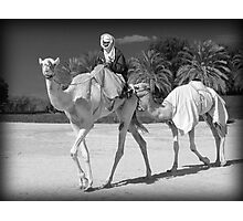 Camels Photographic Print