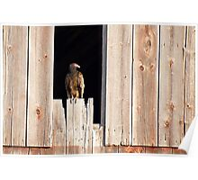 Home to a Turkey Vulture Poster