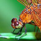 DragonFly by Agus Achmadyana
