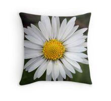 English Daisy (Bellis Perennis) Throw Pillow
