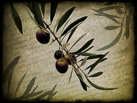 Olive Branch by Beth A