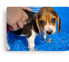 Puppy's First Bath Canvas Print