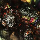 Chameleon's Eye (Goethite) by Stephanie Bateman-Graham