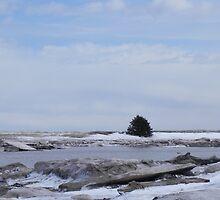 Winter Solitude by Martha Medford
