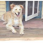 Golden retriever in shade watercolor by Mike Theuer