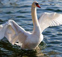 Spreading Wings by Nigel Bangert