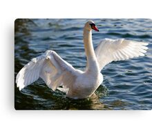 Spreading Wings Canvas Print