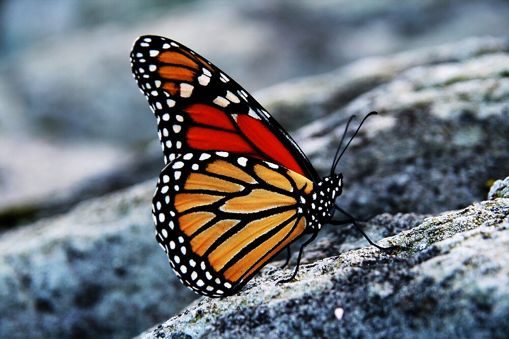 Another Butterfly by smw24