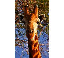 Kruger Giraffe Photographic Print