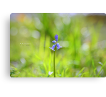 """"""" Lonely Bluebell """" Canvas Print"""
