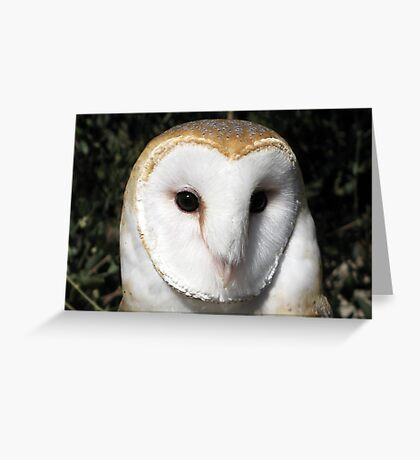Barn Owl ~ Close-Up Greeting Card