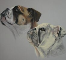 English Bull Dogs by ackstudio