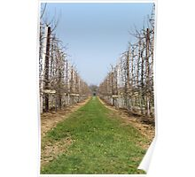 Vineyard Photography Poster