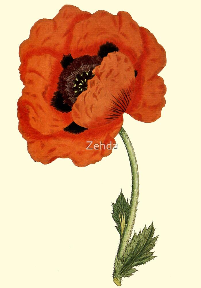 Oriental Poppy Flower Botanical by Zehda