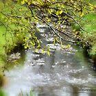 """"""" Calming Brook """" by Richard Couchman"""
