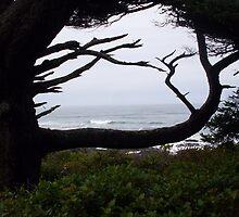 Ocean through the Tree by Karen Hazelwood