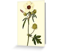 Hibiscus or Venice Mallow Flower Botanical Greeting Card