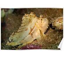 Leaf Scorpionfish (1) Poster