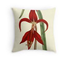 Amaryllis Flower Botanical Art Throw Pillow