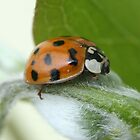 Lady Bug or (gentleman bug) by SKNickel