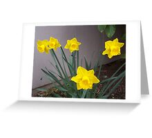 A clump of Spring Greeting Card