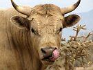 Bull Snot! by Kimberly Chadwick