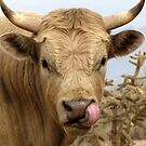 Bull Snot! by Kimberly Chadwick