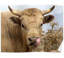 Bull Snot! Poster