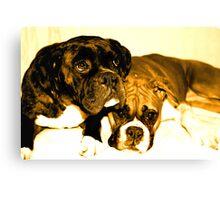 Two boxer friends Canvas Print