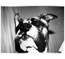 Boxer puppy in black and white Poster