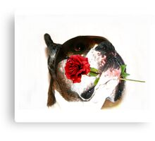Boxer dog with rose Canvas Print