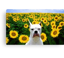 White Boxer in Sunflowers Canvas Print