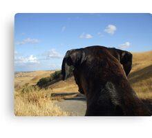 Boxer dog overlooking the horizon Canvas Print