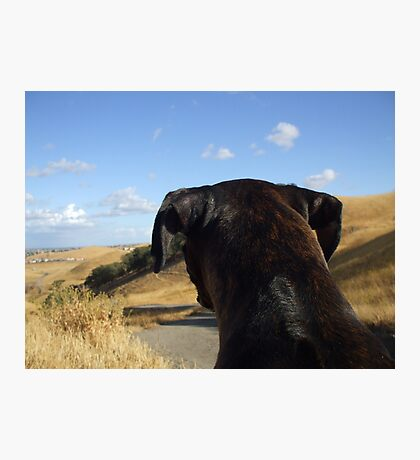 Boxer dog overlooking the horizon Photographic Print
