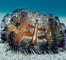 Sea Urchin by M.M.S.W. Botman