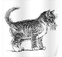 Art cat Poster